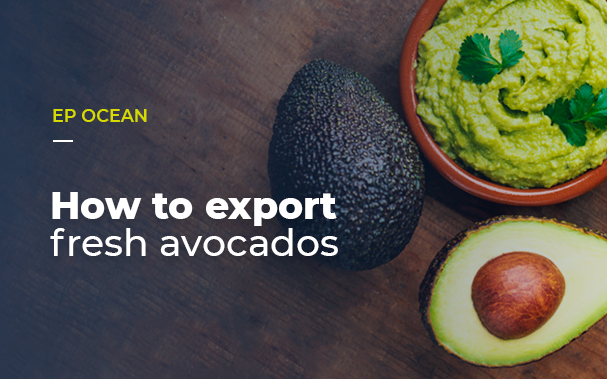 How to export fresh avocados